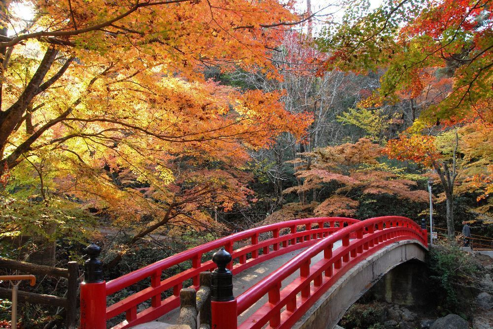 Kōyō 2 (Autumnal foliage)