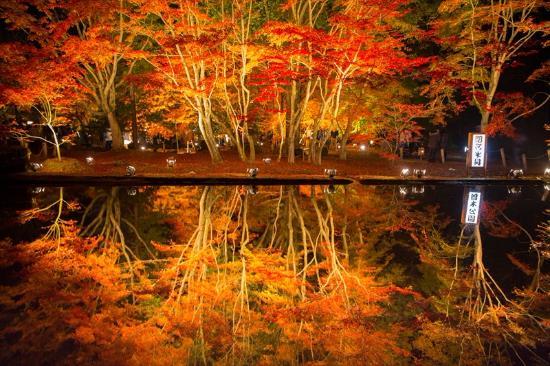 Koyo 2 (Autumnal foliage)