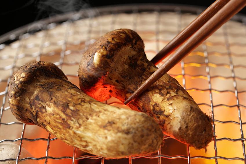 pacific saury,matsutake mushroom