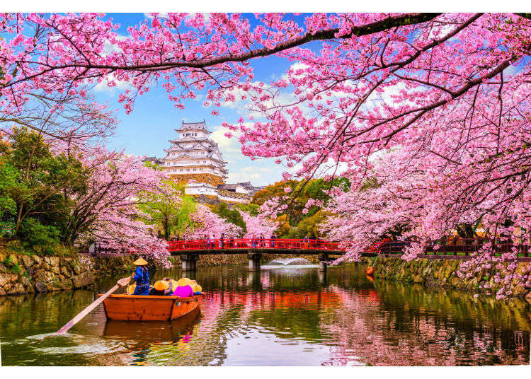 Plum blossom, cherry blossom, peach blossom